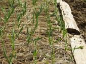 Alternativní řešení - použití suchých rostlinných zbytků