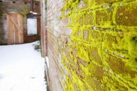Mech na vnější stěně