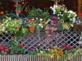 Květiny v truhlících a květináčích