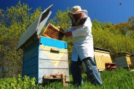 Včelí úly