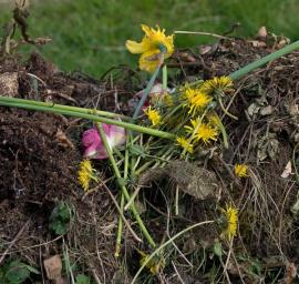 Materiál kompostu