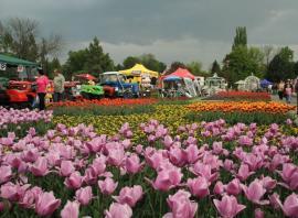 Fotografie z loňského ročníku výstavy Flora Olomouc