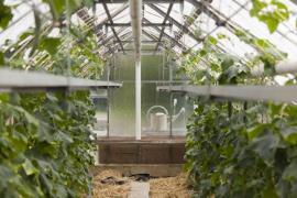 Prostorný prosklený skleník