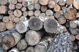 Polena březového dřeva