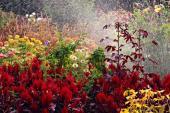 Zavlažování květin