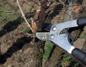 Pákové nůžky pro střih silnějších větví