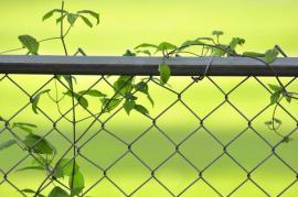 Drátěný plot v ocelovém rámu