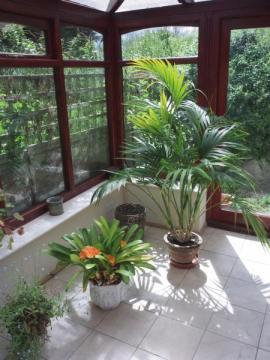 Zimní zahrada - ráj rostlin
