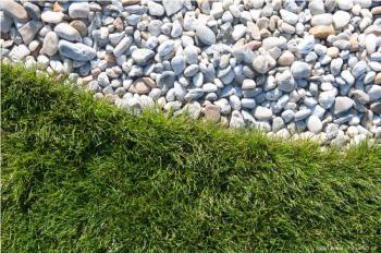 Detail přírodního trávníku