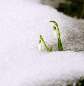 O trávník se začínáme starat po odkvětu prvních poslů jara