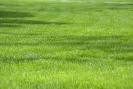 Pravidelně udržovaný trávník