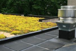 Plochá zelená střecha