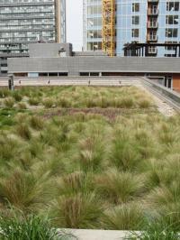 Extenzivní zelená střecha