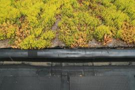 Detail zelené ploché střechy