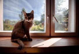 Domácí zvířata do bytu alergika bohužel nepatří