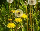 Je tolik druhů pylu, co druhů rostlin