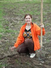 Výsadba ovocných stromků