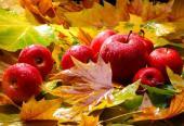 Bohatá podzimní sklizeň