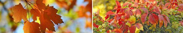 Mnozí řadí podzim k nejkrásnějším měsícům v roce