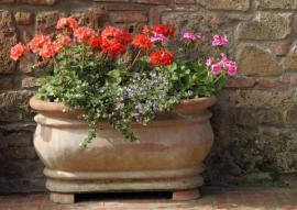 Rostliny v mobilních nádobách zazimujeme