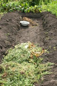 Zelené hnojení zahrnutými zbytky rostlin