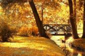 Zlatavé kouzlo podzimu