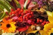 Pestrobarevné kouzlo podzimu