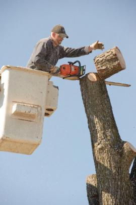Postupné kácení stromu z vysokozdvižné plošiny