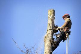 Postupné kácení stromu pomocí lezecké techniky