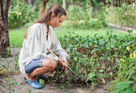 O zeleninu se v říjnu musíme postarat