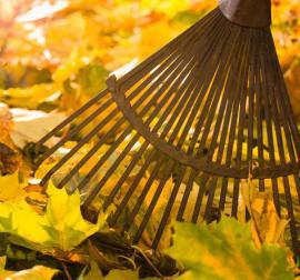 Odstraňujeme listí spadané ze stromů