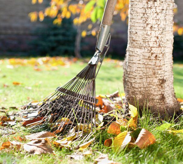Údržba trávníku začíná na podzim stálým odstraňováním spadaného listí