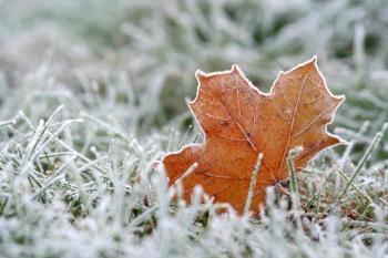 Nějaký ten list, který jsme nestačili z trávníku odstranit, nevadí, za mrazů však po trávníku nešlapeme