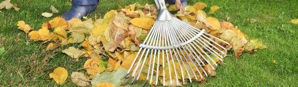 Z trávníku odstraňujeme spadané listí