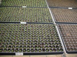 Skleník využijeme k předpěstování rostlin