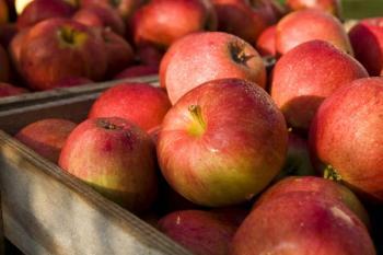 Sklizená jablka