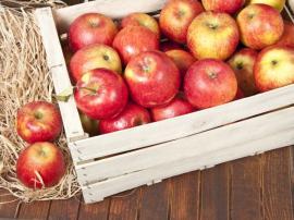 Uskladňovaná jablka