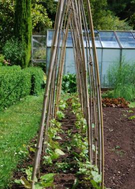 Zahrada v zahrádkářské kolonii