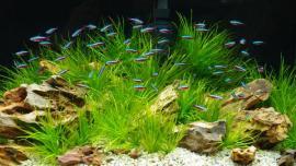 V akváriu vznikne přirozené prostředí