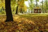 Podzim v lesoparku