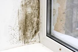 Plíseň na okenním ostění