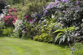 Barvy, tvary a vůně rostlin