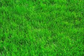 Bezvadně ošetřená travní plocha