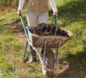 I hnojení organickými hnojivy, kompostem či rašelinou, se běžně provádí