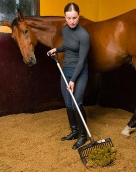 Koňské exkrementy se průběžně ukládají na hnojiště, jde o cennou surovinu