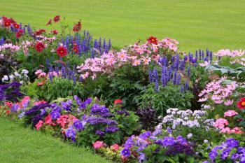 Když květiny dominují jako jednolitý, ale pestrý solitér