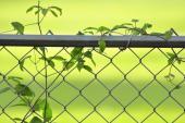 Drátěné pletivo v ocelové plotovce - rámu