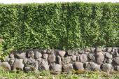Oplocení vyzděné z kamene v kombinaci s živým plotem
