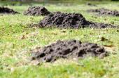 Krtek je největším nepřítelem trávníků