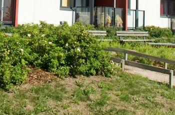 Po zimě poškozený trávník
